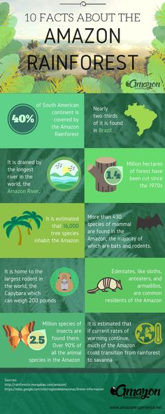 10 Facts about the Amazon Rainforest you probably didn't know. #Infographic #AmazonRainforest #Facts