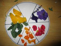 Nature's Color Wheel (Grade PreK)