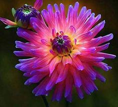 Exotic Flowers, Amazing Flowers, Beautiful Flowers, Prettiest Flowers, Colorful Flowers, Plantas Bonsai, Bonsai Plants, Bonsai Garden, Flowering Plants