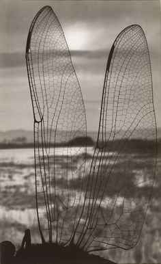 Landscape through dragonfly wings, circa 1930 by Emili Godes