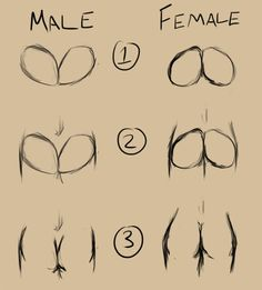 A step-by-step of how I draw butts