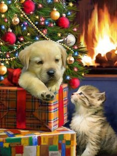 Cute Pup And Kitten Christmas cards UACG2921 are gloss finished and suitable for corporate, business, company or personal use. UACG2921 is a perfect choice for small to large companies. Our Cute Pup And Kitten Christmas cards are printed onto a premium thickness board, acquired only from sustainable sources and produced in the UK. Your personalisation is printed onto a quality white insert. Cute Pup And Kitten are sized at 210x148mm. Christmas Scenes, Christmas Animals, Christmas Cats, Christmas Pictures, Vintage Christmas, Illustration Noel, Christmas Illustration, Christmas Jigsaw Puzzles, Christmas Tree With Presents