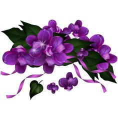 flowers, flores, flowers, bloemen, png