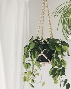 Our wooden plant hangers are perfect for any plant to hang out in |  For yourself or a gift for any occasion | Handmade with Canadian maple ethically in our studio in Winnipeg