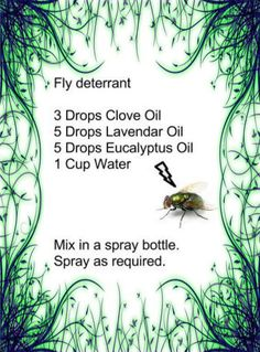 Your Own Fly Spray - Homemade Fly Spray with Essential oils. Just in time for summer!Make Your Own Fly Spray - Homemade Fly Spray with Essential oils. Just in time for summer! Yl Oils, Doterra Essential Oils, Young Living Oils, Young Living Essential Oils, Essential Oil Uses, Essential Oil Diffuser, Aromatherapy Diffuser, Melaleuca, Homemade Fly Spray