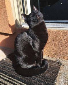 teen asijské kočička obrázky