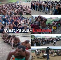 (11) Twitter Cultural Assimilation, West Papua, Dutch East Indies, Still Standing, African History, Borneo, Papua New Guinea, Black History, Geography