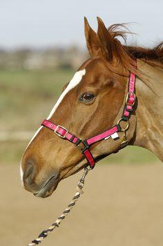 horses - Google Search