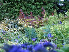 Purples and violets and magentas in Butchart's amazing gardens Sunken Garden, Italian Garden, Violets, Amazing Gardens, Plants, Plant, Pansies, Planets