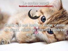 Allah, Muslim Religion, Religious Studies, Business Motivation, Ramadan, Quran, Fun Facts, Facebook, Life