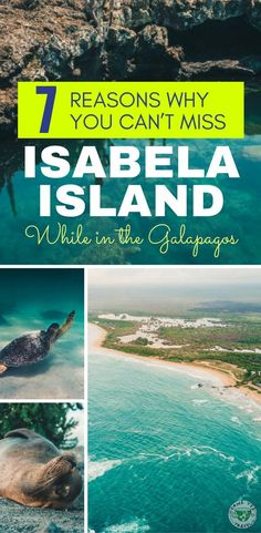 Planning a trip to the Galapagos, Ecuador? Here are 7 reasons why you should include Isabela Island in your itinerary.