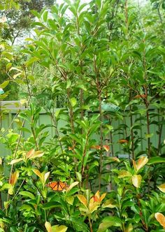 . Butterfly In Garden. Establishing and maintaining a garden can be expensive but there are many ways to keep the cost down.
