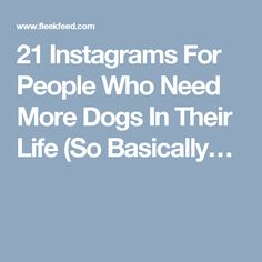 21 Instagrams For People Who Need More Dogs In Their Life (So Basically…