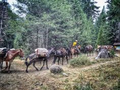 #JulyComplex Pack stringers being used to assist the firefighting efforts on the Log fire (photo from The Forest Service-Klamath National Forest) My son Reece was in a crew at the Spike Camp that made initial attack on new lightning fires west of the main Log Fire.