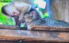 I love you so much why you don`t?!?.. #gif #funny #monkey #cat #touching