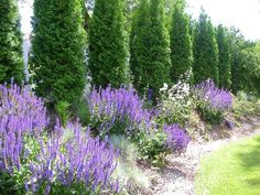 arborvitae and lavender (excellent color, but the more perennials the better to extend the bloom period)