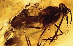 """El Museo Geominero muestra su """"tesoro"""" de fósiles de 105 millones de años"""