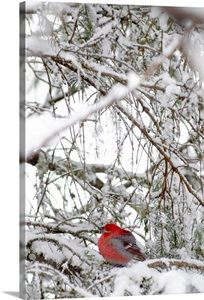 Winter Scenery, Winter Trees, Winter Snow, Hello Winter, Winter Love, Winter Images, Winter Photos, Photo Animaliere, Snow Scenes