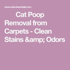 Cat Poop Removal from Carpets -  Clean Stains & Odors