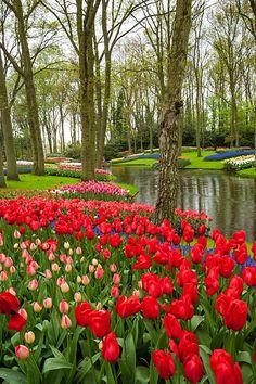 Keukenhof Gardens, near Amsterdam, Netherlands #Keukenhof #flowers #Holland