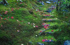 霊鑑寺:苔×椿  #霊鑑寺#京都#椿#苔#花#moss #nature#kyoto#japan#webstagram#instagood#canon#幸せ#love