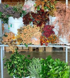 Lots of varieties of brown flowers for your flower projects from Florabundance Wholesale Brown Flowers, Flowers For You, Fall Flowers, Amaranthus, Chrysanthemums, Ranunculus, Workshop, Awesome