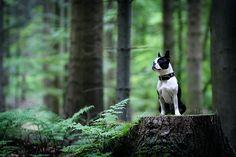 A Noble, Brave Little Dog