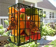 Butterflies & Fruit Adding a fruit feeder to your butterfly garden can help attract butterflies. Many butterflies do not live on flower nectar alone. Some species prefer, even require, overripe fruit to feed on. Butterflies are particularly fond of sliced, rotting oranges, grapefruit, strawberries, peaches, nectarines, apples & bananas. Butterfly Lady