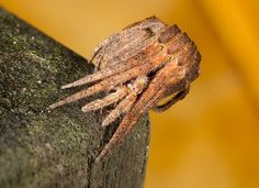 Tree Stump Spider   This spider definitely has one of the best forms of camouflage in the animal kingdom – it sits on a tree and waits for its insect prey to pass