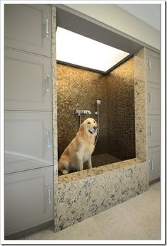built in dog bath | here are some fab dog baths what a great idea