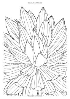 20 Best Color Me Stress Free Coloring Book Images On Pinterest