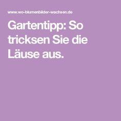 Gartentipp: So tricksen Sie die Läuse aus.