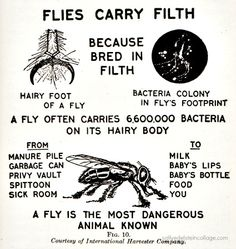 """Vintage diagram """"A Fly is the Most Dangerous Animal Known"""" from American Red Cross Text Book on Home Hygiene 1933"""