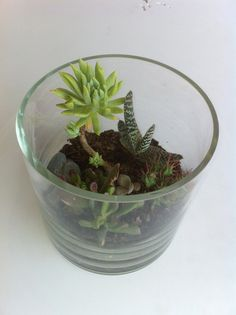 Experimenting with terrariums