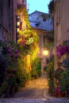 A cobbled street in Italy. A riot of flowers.