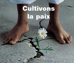 Cultivons la paix