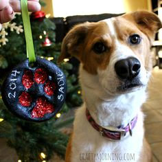Learn how to make a puppy paw print christmas ornament out of salt dough. It's a great keepsake for dog owners.