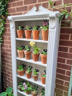 Primula Auricula, Terracotta Pots, Joinery, Gardening Tips, Planter Pots, Theatres, How To Plan, Building, Flowers