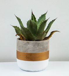 We love how these water wise succulents also make a great indoor plant to give a space life. Water Wise, Water Plants, White Wood, Indoor Plants, Planter Pots, Studios, Succulents, Space, Gallery