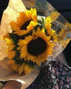 Sunflowers And Roses, My Flower, Flower Power, Beautiful Flowers, Sun Flowers, Good Day Sunshine, Sunflower Wallpaper, Mirror Wall Art, Wall Sconces