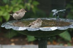 Sparrows Brown Bird, Sparrows, Birds Of Prey, Little Birds, Favorite Things, Houses, Eye, Friends, Garden