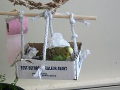 {DIY budgie toys} Would be interesting/worthwhile to repurpose these for Kona...