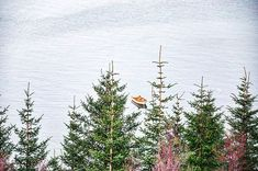 🚣 Photo from Norway. 🇳🇴 looks so serene. Can't wait to feel like that again. . For now.  Week 3 exams. 5 days. 😵 #justkeepswimming #lake #norway #lofoten #vesterålen #visitnorway #getoutside #pinetrees #fishingboat #serenity #getoutside #camerafun #scandistyle #forest #adventure #lovetheoutdoors #fishing #getoutside
