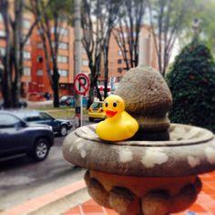 El Pato en una fuente en la calle 94 de Bogotá, Colombia.