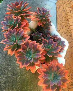 Beautiful succulents!!'