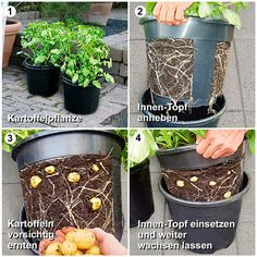 Kartoffel-Pflanztopf PotatoPot® | #2