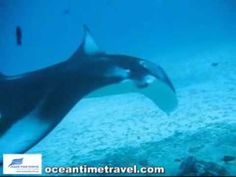 Dive with Mantas in the Maldives