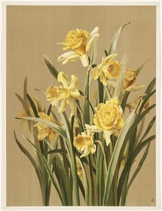 Daffodils   by Boston Public Library