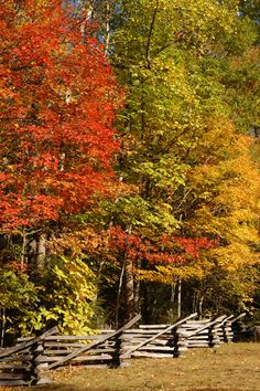 Beautiful fall leaves in the Great Smoky Mountains