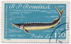 Franco Bollo Ocean Art, Stamp Collecting, Marine Life, Postage Stamps, Dolphins, Shark, Fish, Lettering, Label